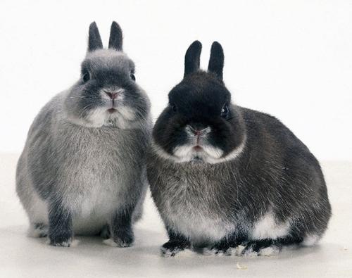 Кролиководство как бизнес